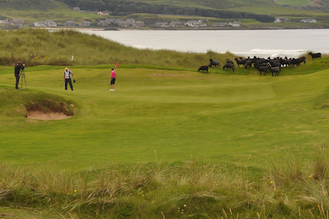 Post image for Sheep on the 14th green